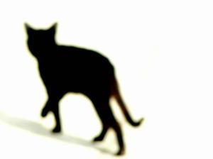 cat-345439_640