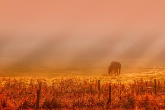 sunrise-3377564_1920