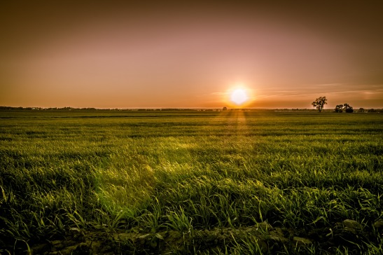 sunset-over-the-fields-3815752_1920