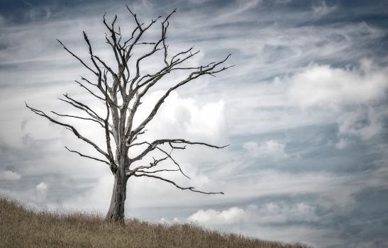 tree-2487889_1920