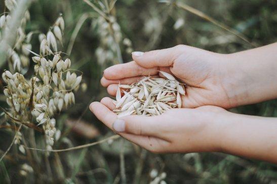 oats-3717095_1920